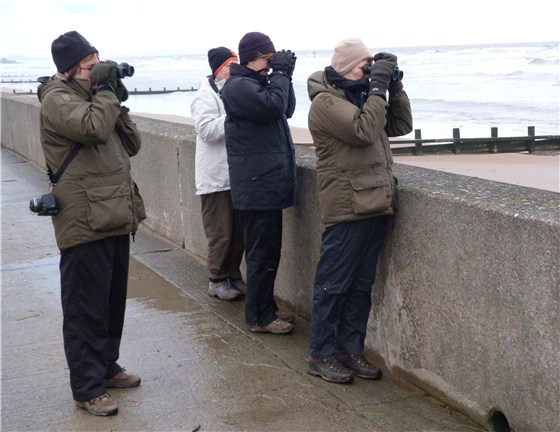 Wheatear watchers