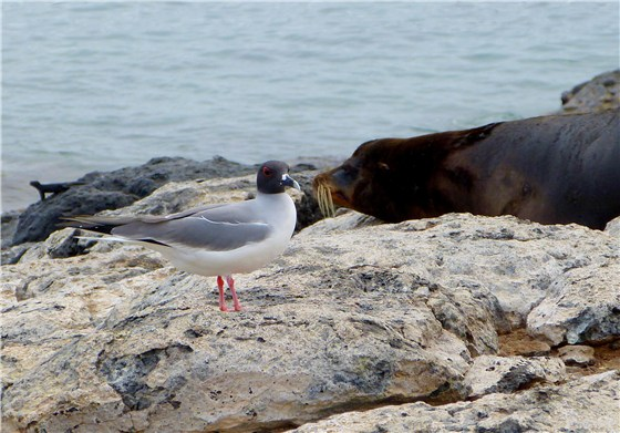 Gull and Seal