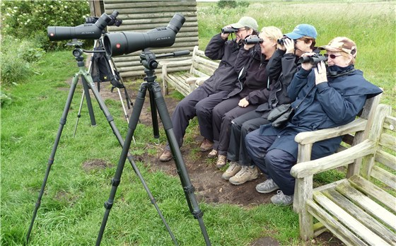 Bittern watchers