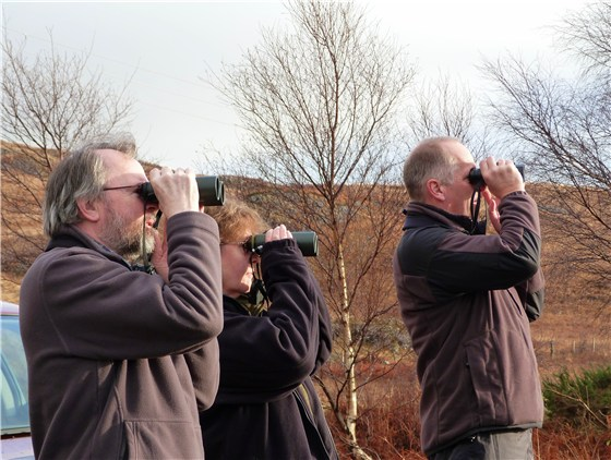 Eagle watchers 2