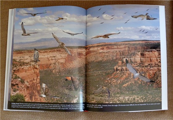 Crossley ID Guide Mixed Raptor spread