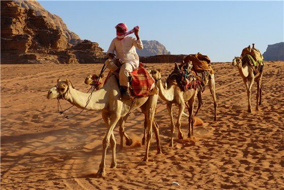 Wadi Rum desert camel train