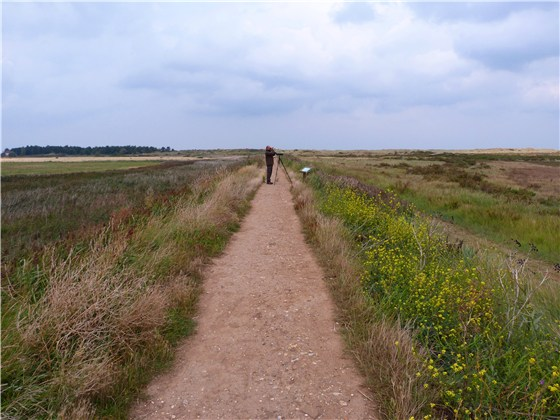 Thornham Harbour birding
