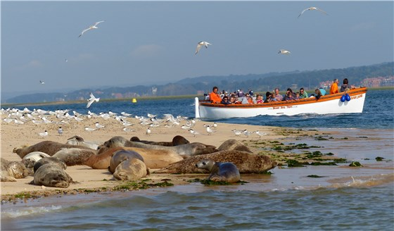 Blakeney Point boat and seals