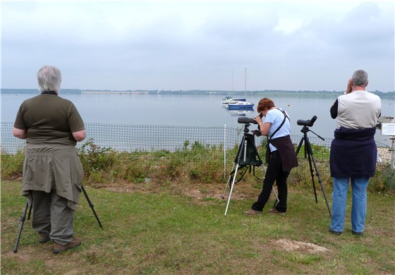 Tern watchers