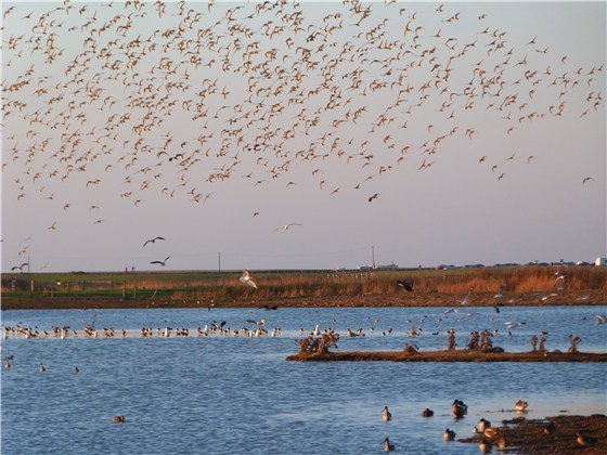 Cley bird spectacle