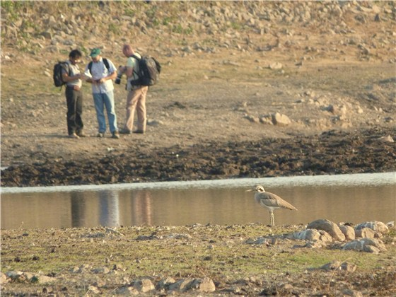 Great Thick Knee and birders 2