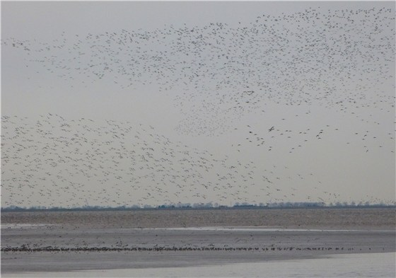 Snettisham dawn waders 5