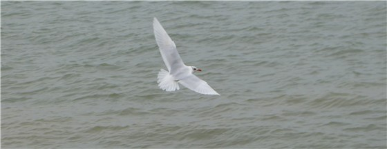 Med Gull Tues flight
