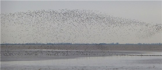 Snettisham dawn waders 4