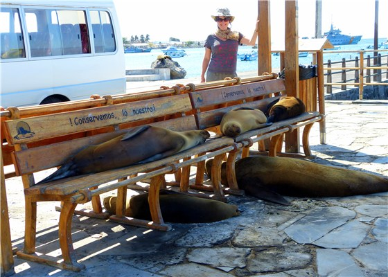 Seals relax 1
