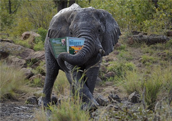 Elephant and Book