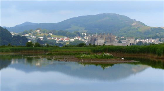 RSPB Conwy reflections
