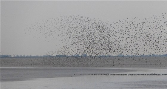Snettisham dawn waders 2
