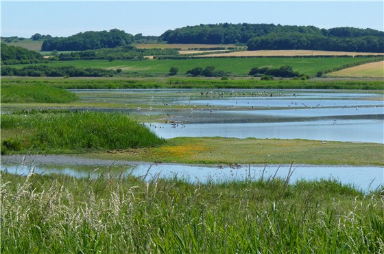 Cley NWT North Scrape 1