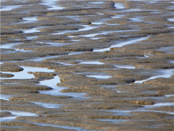 Mud Snettisham