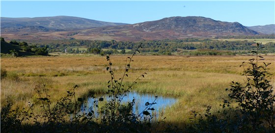 Insh Marshes view 1